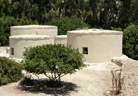 reconstructed: Reconstructed structures with trees