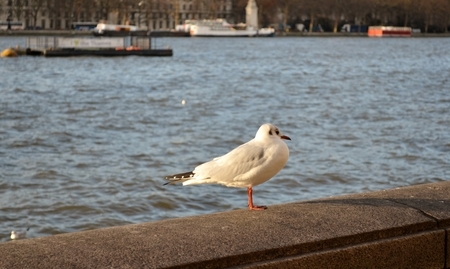 wade: Small seagull standing on wall fence  Stock Photo