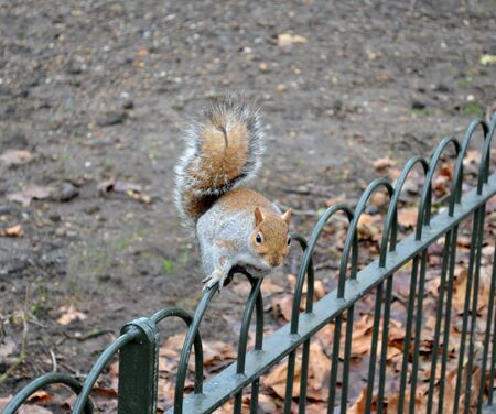 Wild squirrel from a park photo