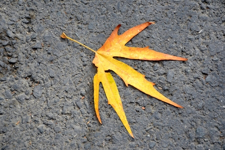 Details of a fallen yellow leaf on road in autumn