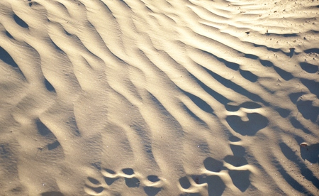 Outdoor landscape of wild desert with patterns and animal foot prints