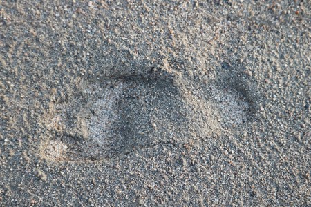 human footprint in the sand