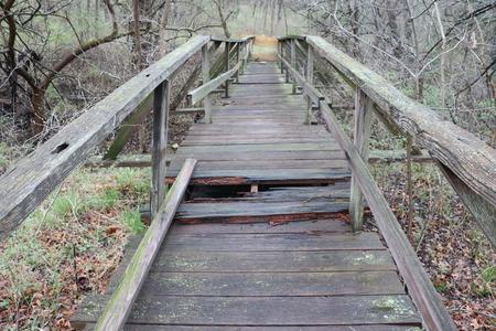 Rotting Bridge in the Woods