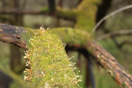 Green Flora on Limb Stok Fotoğraf