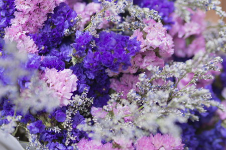 Pink, purple and white Gypsophila flower