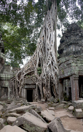 arcane: Ficus Strangulosa tree growing over a doorway in the ancient ruins of Ta Prohm at the Angkor Wat site in Cambodia (UNESCO world heritage site) - wide angle view, in Angkor Thom, Cambodia, South East Asia. Tradition, Culture and Religion.