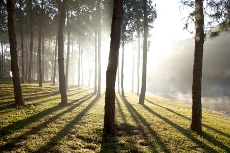 Natuur bomen bij het meertje in de ochtend, Thailand.