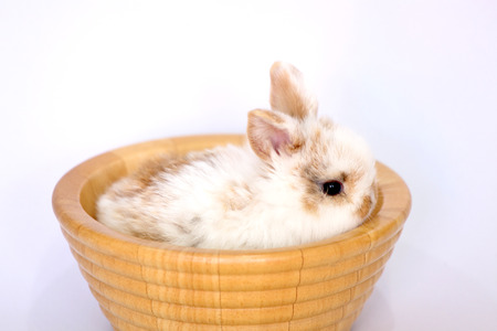 easter bunny rabbit portrait sitting in the wooden basket on white background Banco de Imagens
