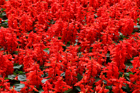 Red Flowers in Pattern