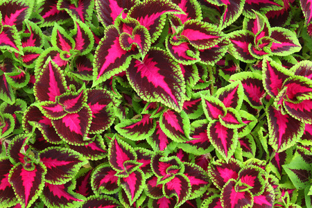 Magnificent Leaves Pattern  Natural Pattern Background