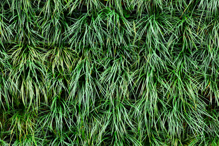 Green grass background  Natural Pattern Background Banco de Imagens