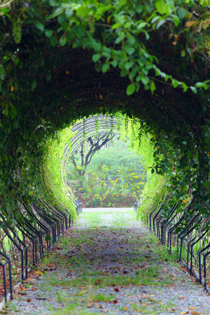 A green tunnel of trees Banco de Imagens