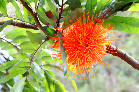 Tree with orange flower Banco de Imagens