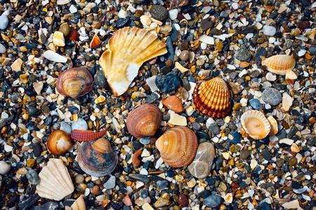 Sea shells scattered among  shingles