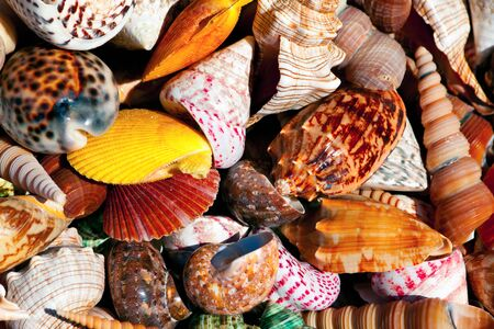 Colorful sea shells , different shapes and colors