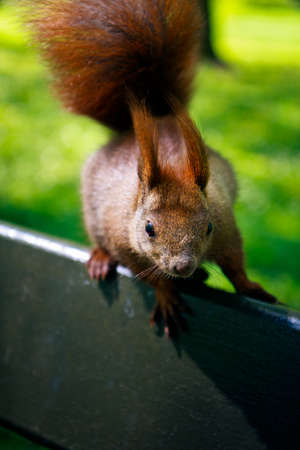 Crazy little squirrel looking curiously Stock Photo - 27489965