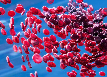 血液 - 赤血球