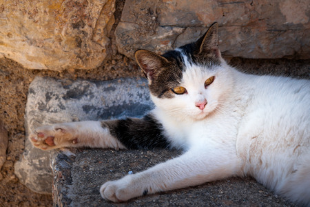 having a break: Piebald Cat having a break