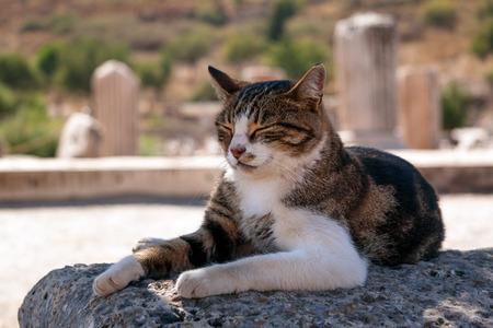 Cat taking a nap among ruins