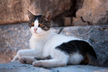 Alarmed Cat stone background