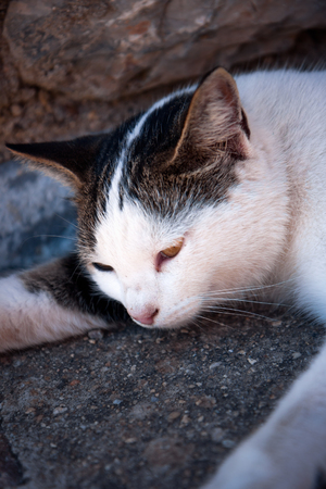 piheno: Cat nyugalmi Stock fotó