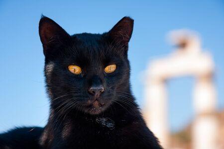 Black Cat like an ancient God Bastet Stock Photo