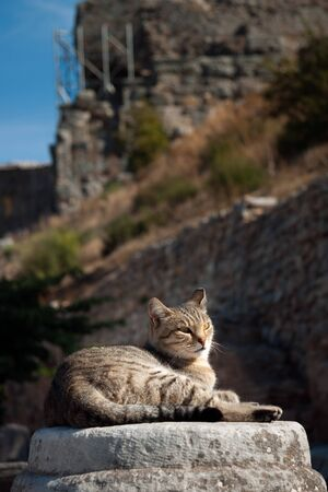 Cat resting on a rock among ruins