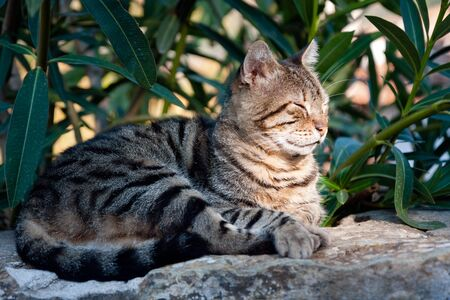 Cat taking a nap on a rock Stock Photo