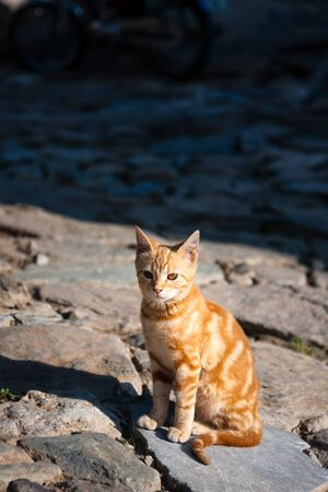 Red street cat waiting