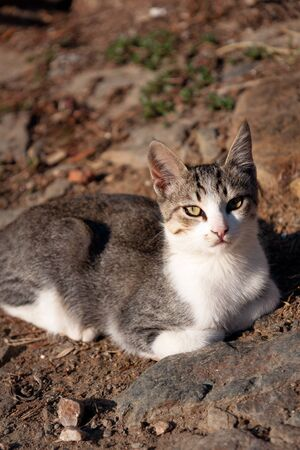 piebald: Stray Cat sitting on the ground Stock Photo