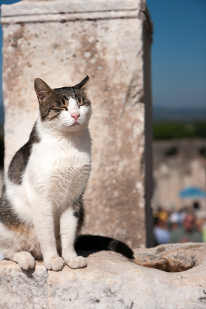 piebald: Cat basking in the sun Stock Photo