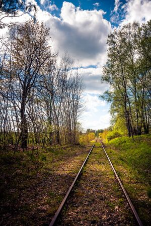 forest railroad: Railway track in the forest. Railroad to nowhere