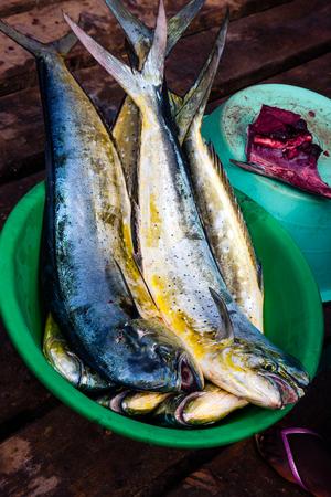 gilthead bream: Gilt-head bream fish catch on sale - dorada Stock Photo