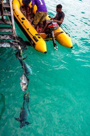 Fishermen fresh tuna fish catch Editorial