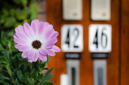 Purple flower Stock Photo