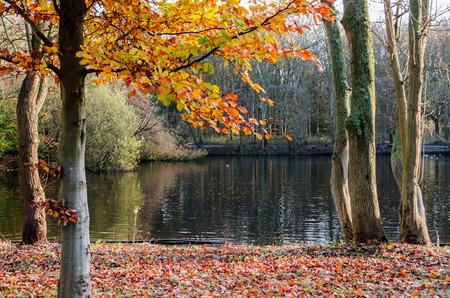 Autumn forest 스톡 콘텐츠