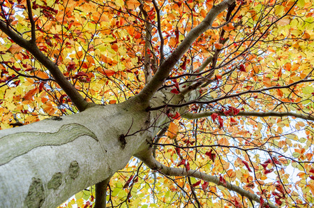 Tree in autumn colors Stock Photo