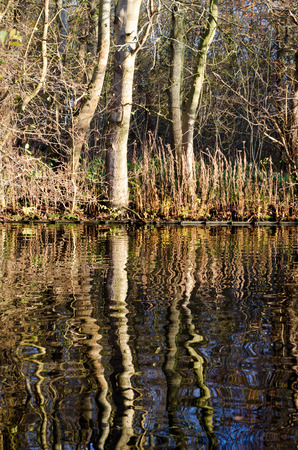 Trees mirroring in the water 스톡 콘텐츠