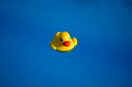 squeaky clean: Rubber duck in the swimming pool Stock Photo