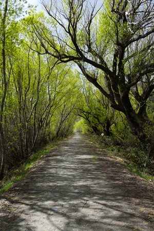 Gravel path through trees in Glenorchy, South Island, New Zealand