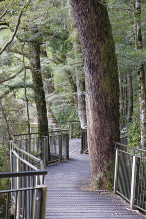 Wooden walkway in Fjordland National Park, National Park Stock Photo