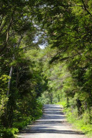 Gravel road in native bush, rural New Zealand