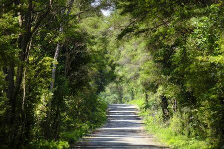 Gravel road in native bush, New Zealand