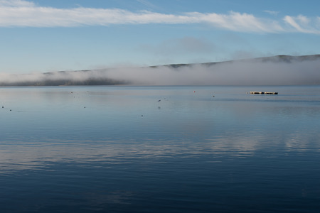 Pontoon and birds in the morning fog