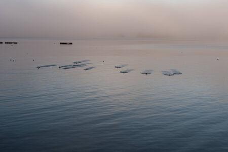 gleams: Birds landing on water at dawn Stock Photo
