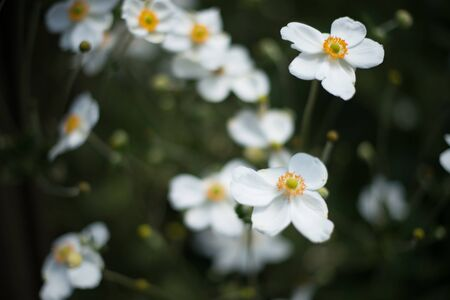 Flowerbed with white flowers