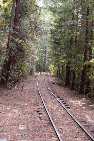 industrialization: Railroad tracks in the forest