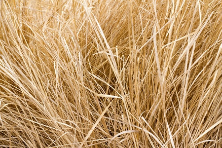 image background stems of last years dry grass