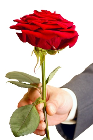 red roses alive in the men's hand Stock Photo - 9061308