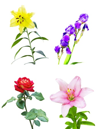 set of four different flowers on a white background photo